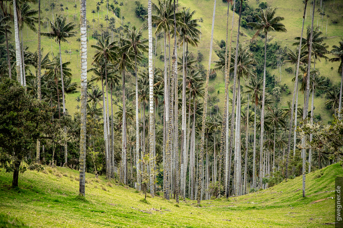 Gunther Wegner Photo Colombia 2018 wax palms